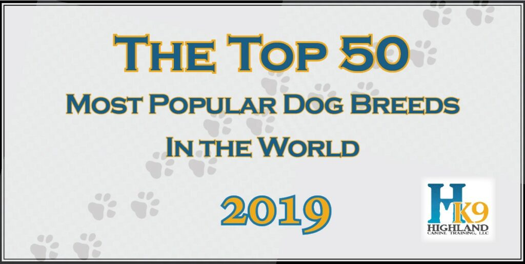 hk9 50 top dog breeds