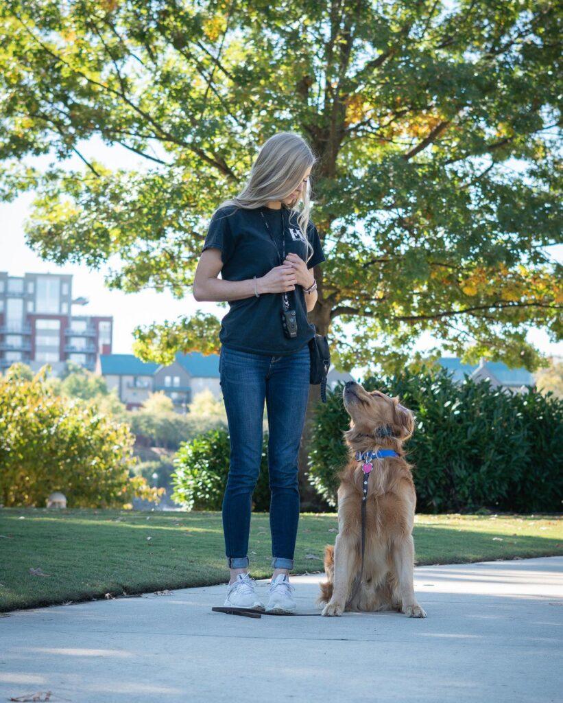 highland canine training dog and dog trainer