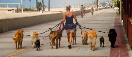 dogs out on leashes being socialized